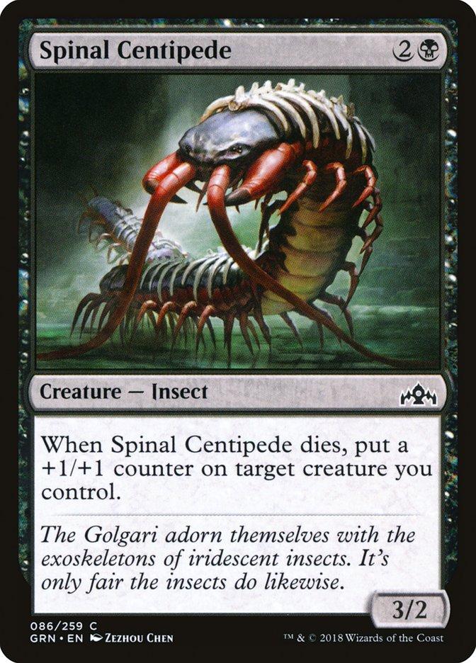 Spinal+Centipede