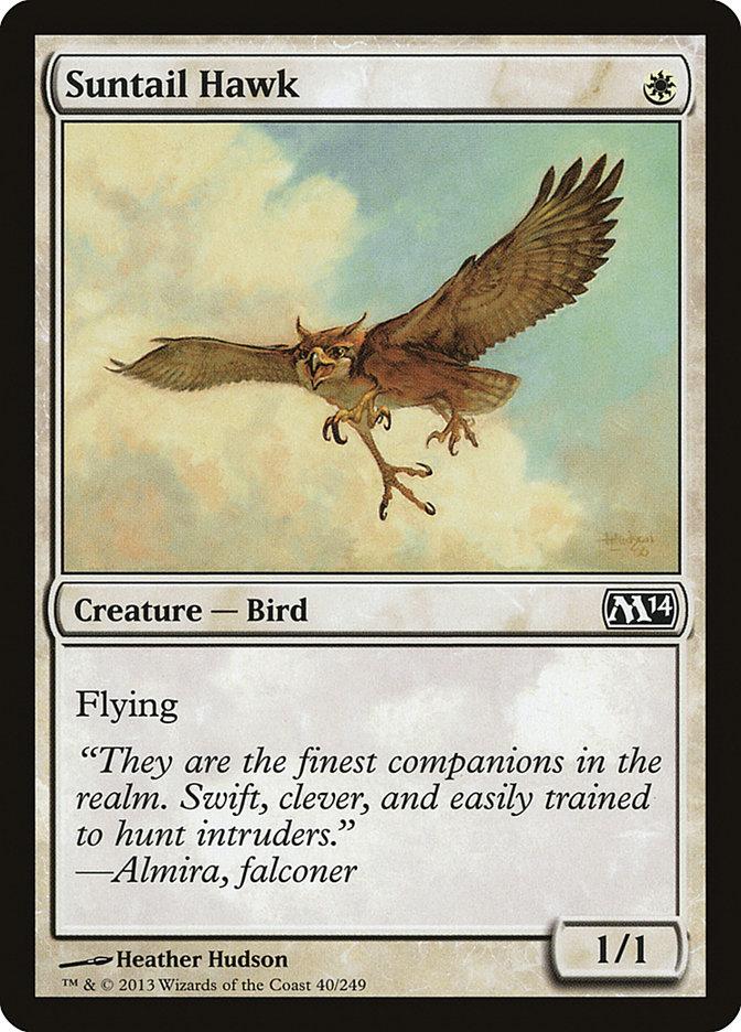 Suntail+Hawk