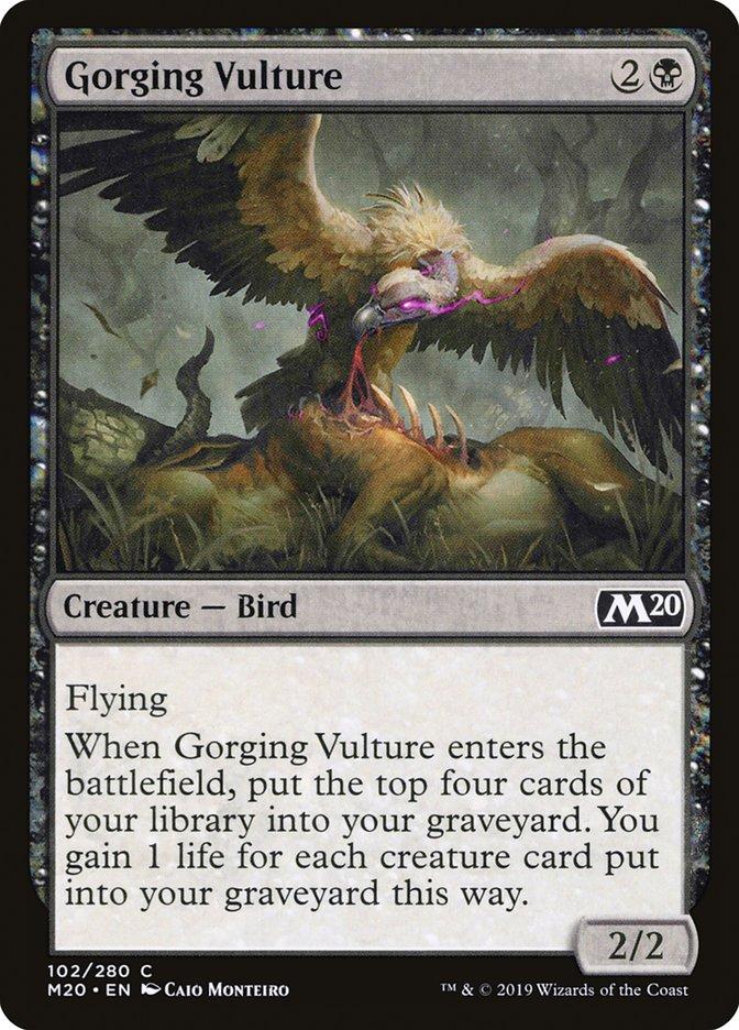 Gorging+Vulture