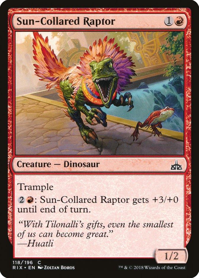 Sun-Collared+Raptor