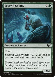 Scurrid Colony
